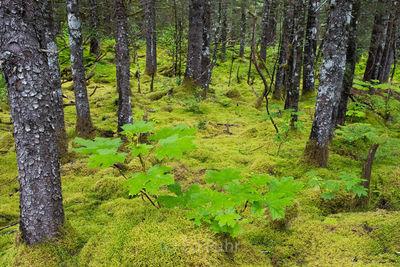 Tropical Alaska