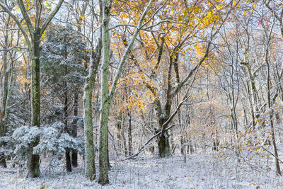 Color in the Wintry Woods
