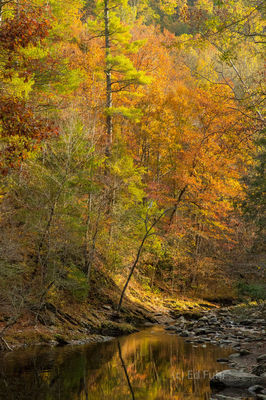Autumn Stream Reflections