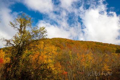 Autumn Ridge, Great Smoky Mountains
