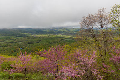 Spring View into the Shenandoah Valley