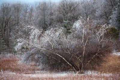 Shenandoah, Shenandoah National Park, photograph, photography, winter, images, photographs of Shenandoah National park, snow