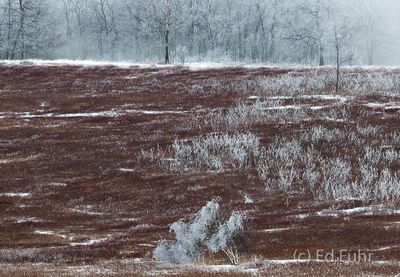 Ice Covered Big Meadows