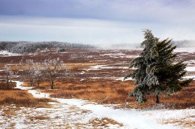Shenandoah, Shenandoah National Park, photo, photography, images, mountains, wilderness, Virginia, winter, snow, deer