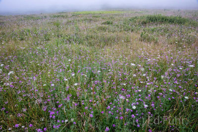 shenandoah national park, wildflowers, summer, image, photographs
