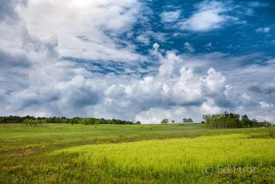 Big Meadow Ferns