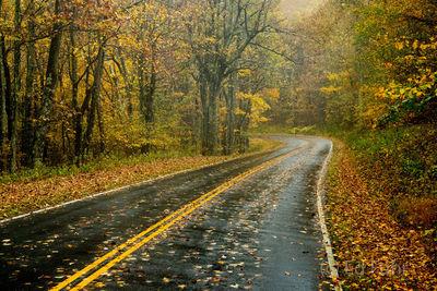 Fall Brilliance on Skyline Drive 2016