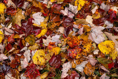 Fall's Fallen Leaves