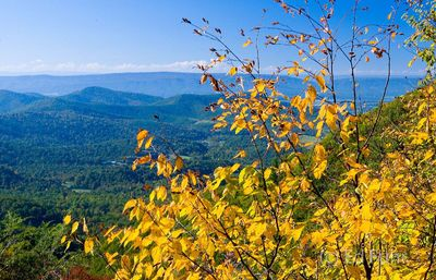 Shenandoah Fall Overlook