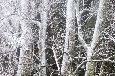 Shenandoah, Shenandoah National Park, photo, photography, images, mountains, wilderness, Virginia, winter, snow