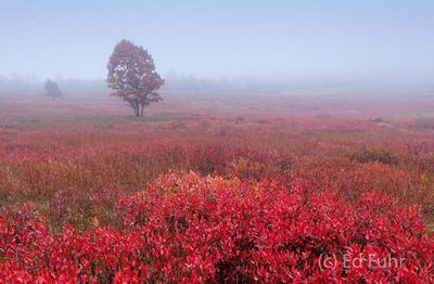 Red Meadows
