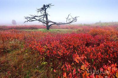 Fall in Big Meadows