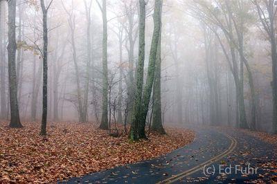 Fog on Lewis Mountain