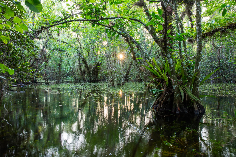 big cypress swamp, everglades, florida, fine art, , photo