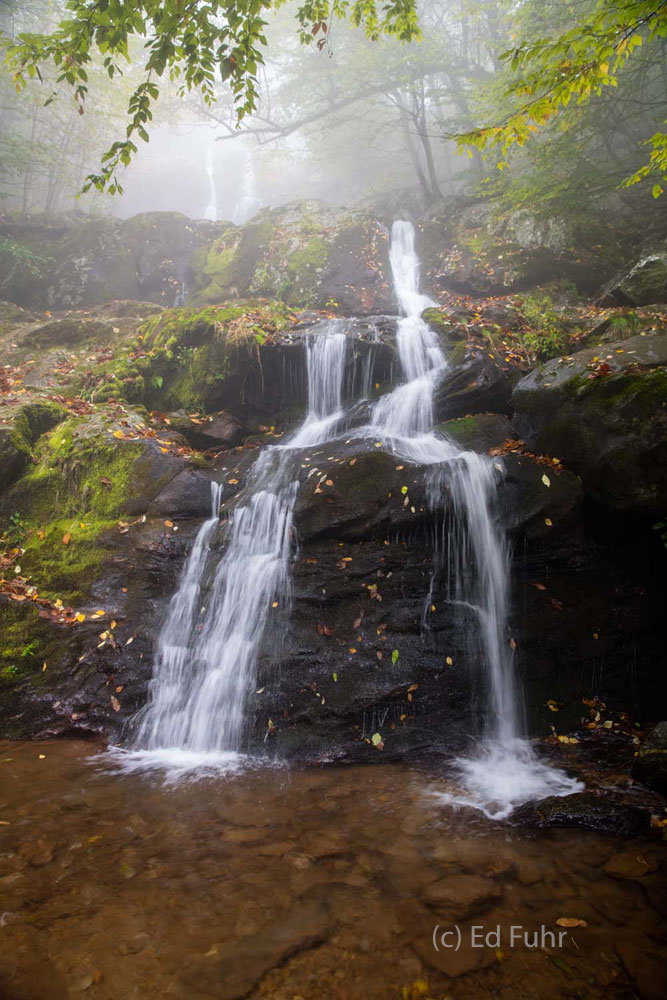 Draped in moss, shrouded in fog and littered with fall's fallen leaves, Dark Hollow Falls beckons.