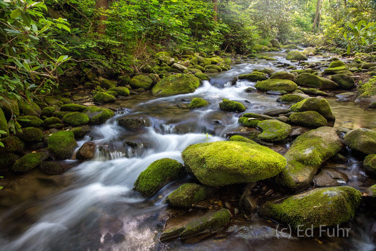 cades cove, loop road, stream, photo