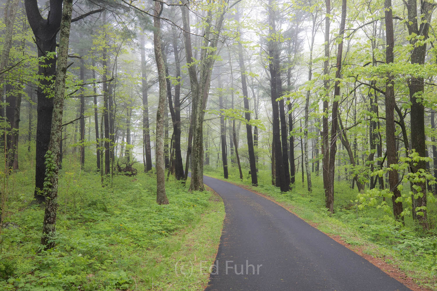 Shenandoah national park, spring, photograph, image, photo