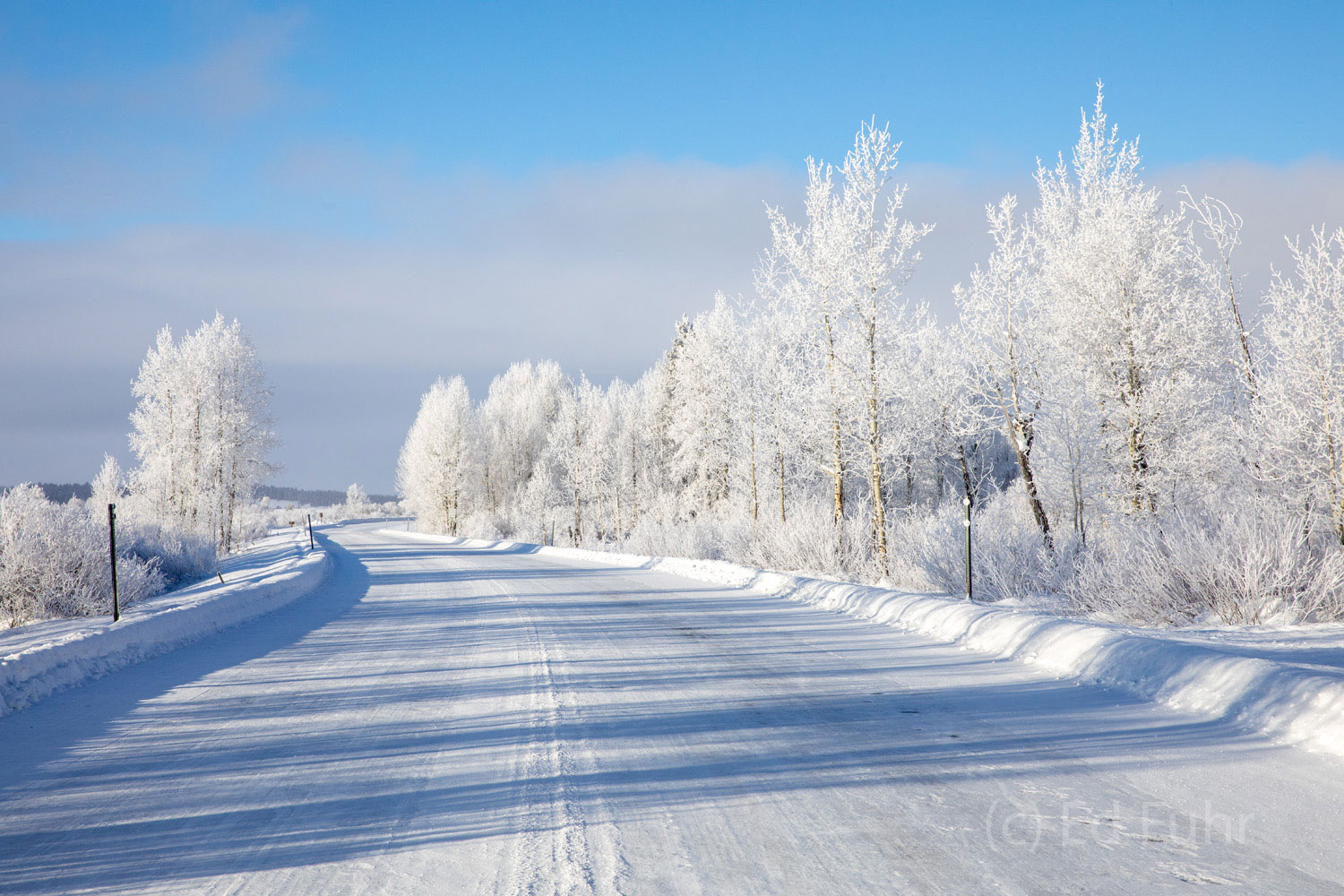 aspen, hoarfrost, tetons, road, winter, photo
