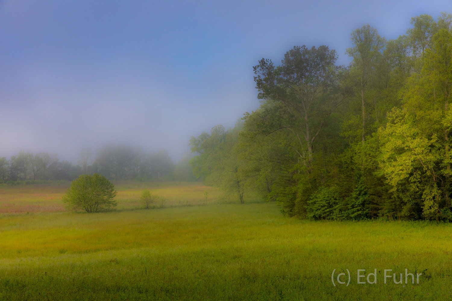 abstract, impression, cades cove, spring , photo
