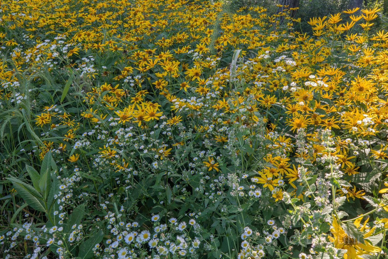 Wildflower Feast