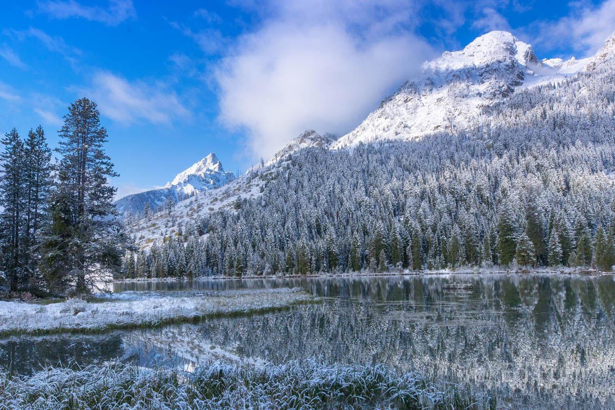 aspen, snow, autumn,, photo