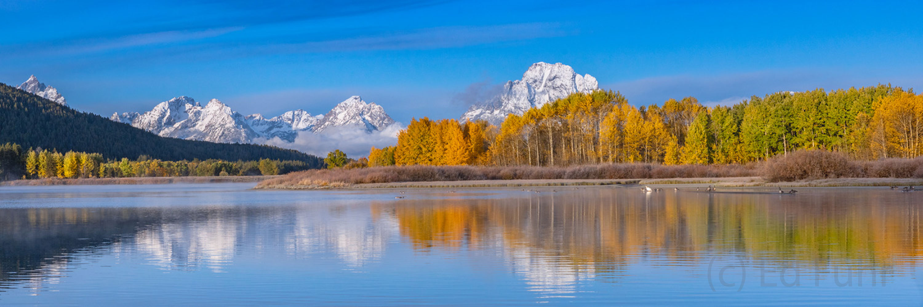 Autumn sunrise at Oxbow Bend with the aspen peaking and fresh snow on Mount Moran make for a magical morning to remember.