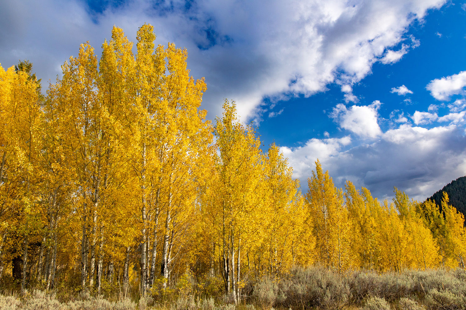 The musty smell of autumn leaves complements the spectacular contrast of glowing aspen and bluebird skies.