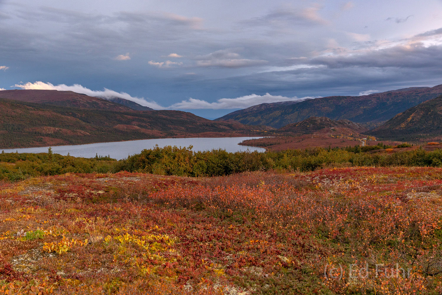 Banked by vast fields of blueberries, turned red by autmn's chill, Wonder Lake stretches to Denali.