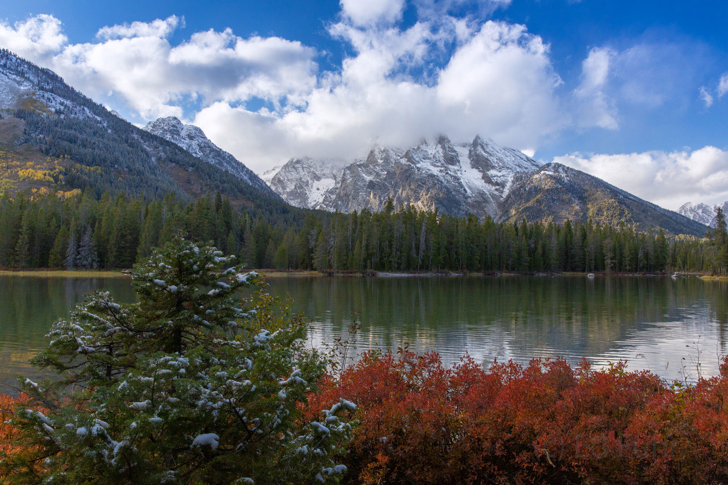 The blueberry bushes around String Lake have turned red in the cool nights of autumn.  But winter is not far and the first snows...