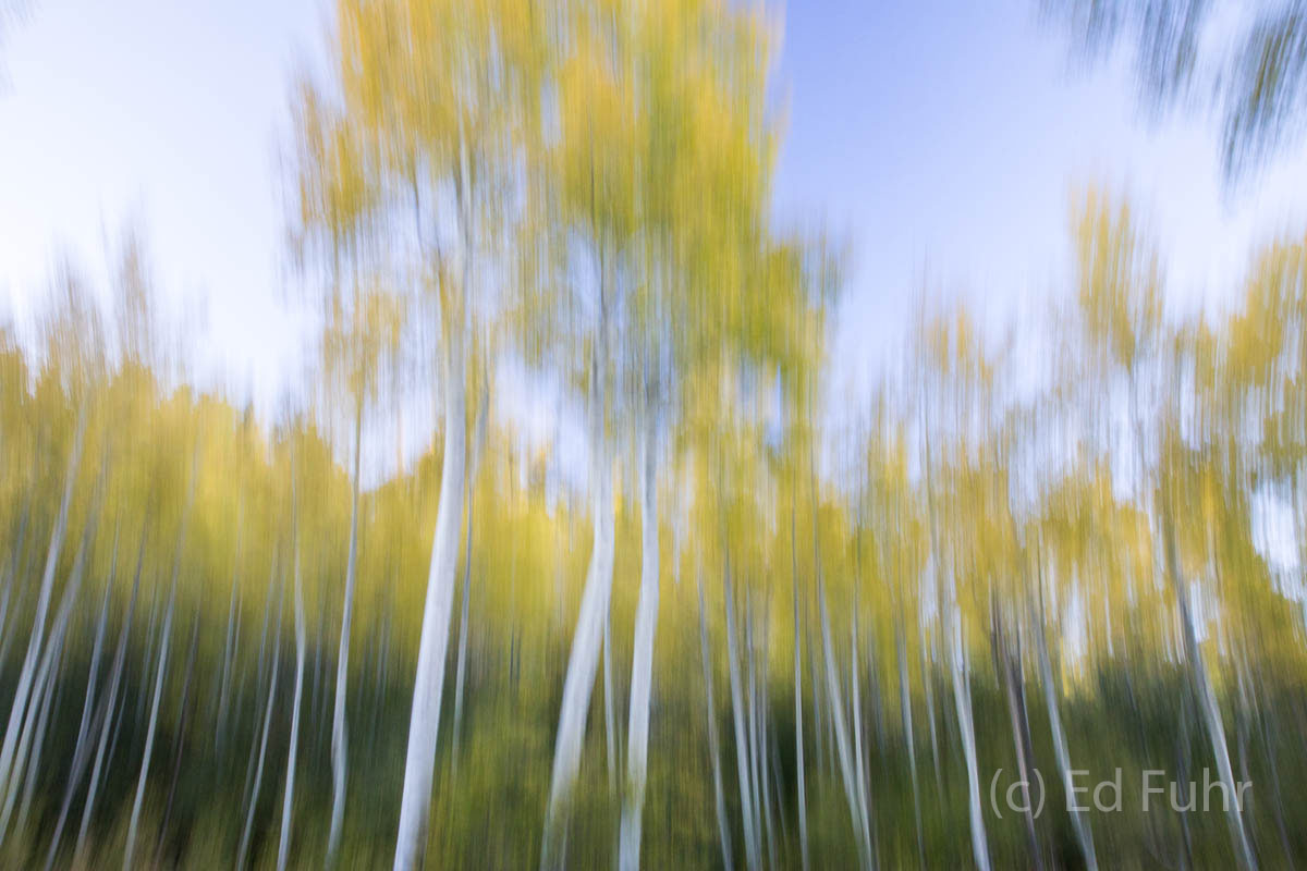 Surrounded by thousands of glowing aspen, it is easy to imagine you have fallen into some dreamy landscape.