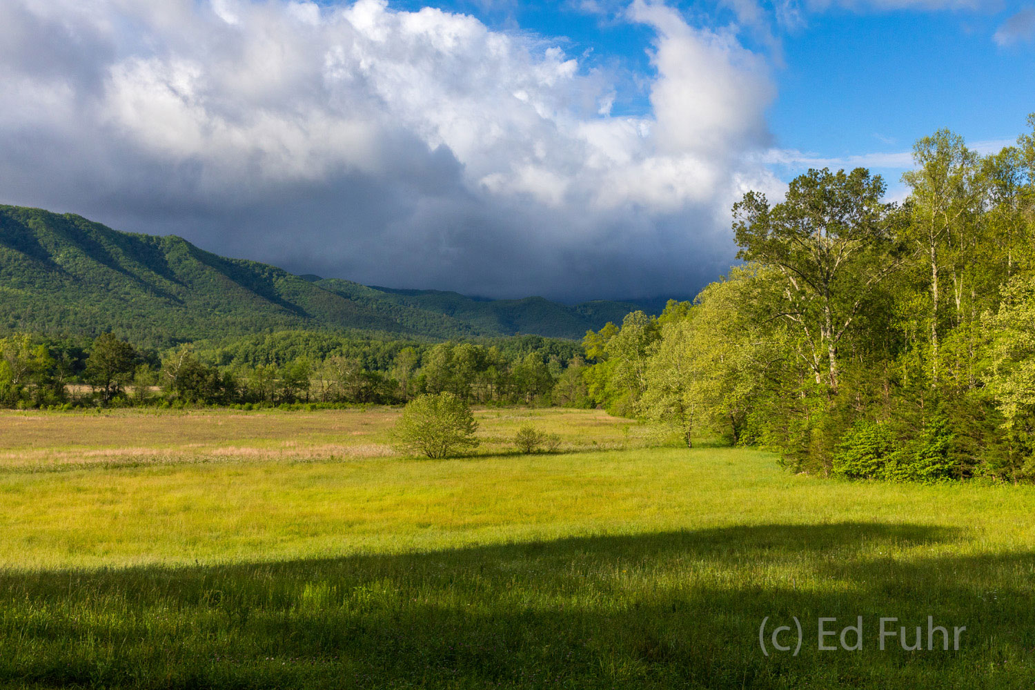 Spring Cades Cove Valley View
