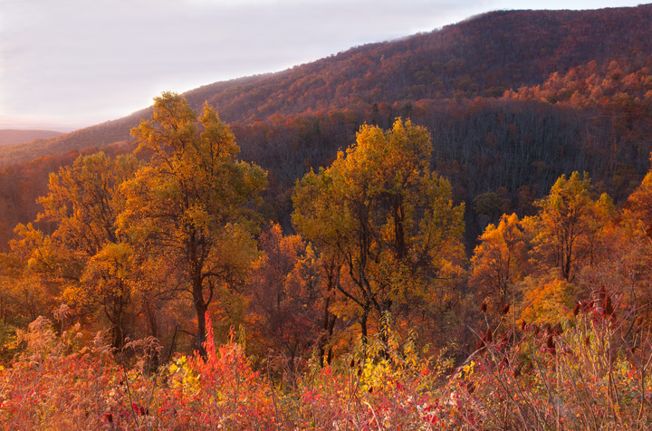 shenandoah national park, photo, photograph, foliage, fall, photo