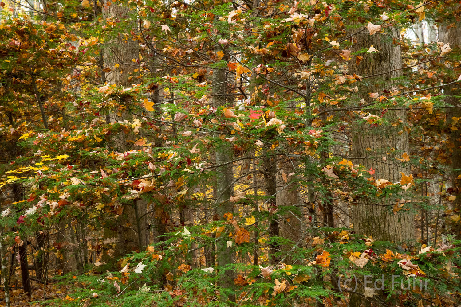 autumn, fall, foliage, smoky mountains, gsmnp, color, photo