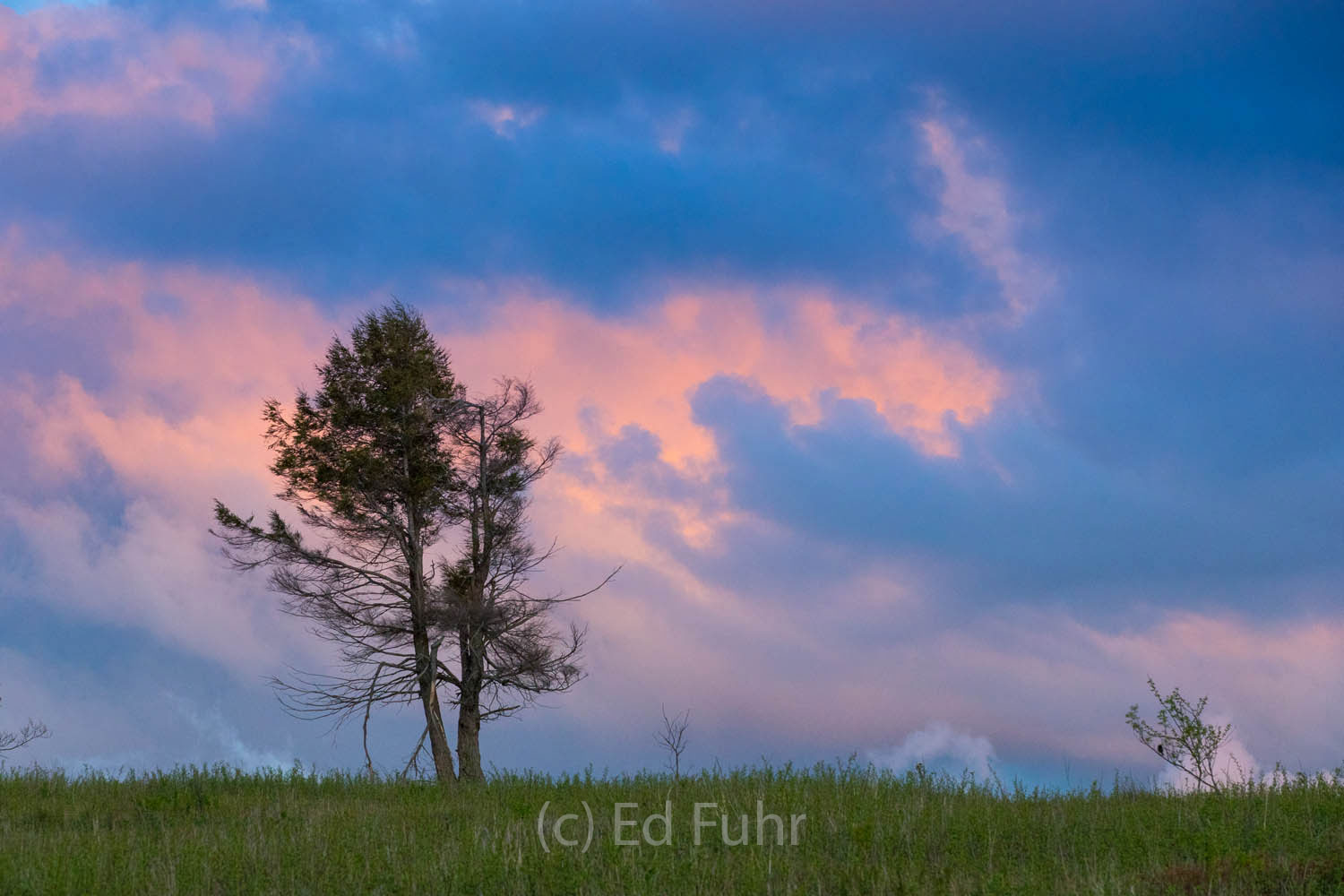 A lone pine stands astride a nearby ridge as dawn breaks.