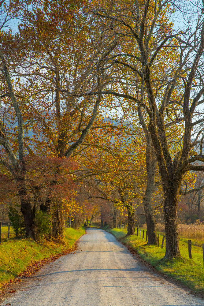 autumn, fall, foliage, smoky mountains, gsmnp, color, cades cove, photo