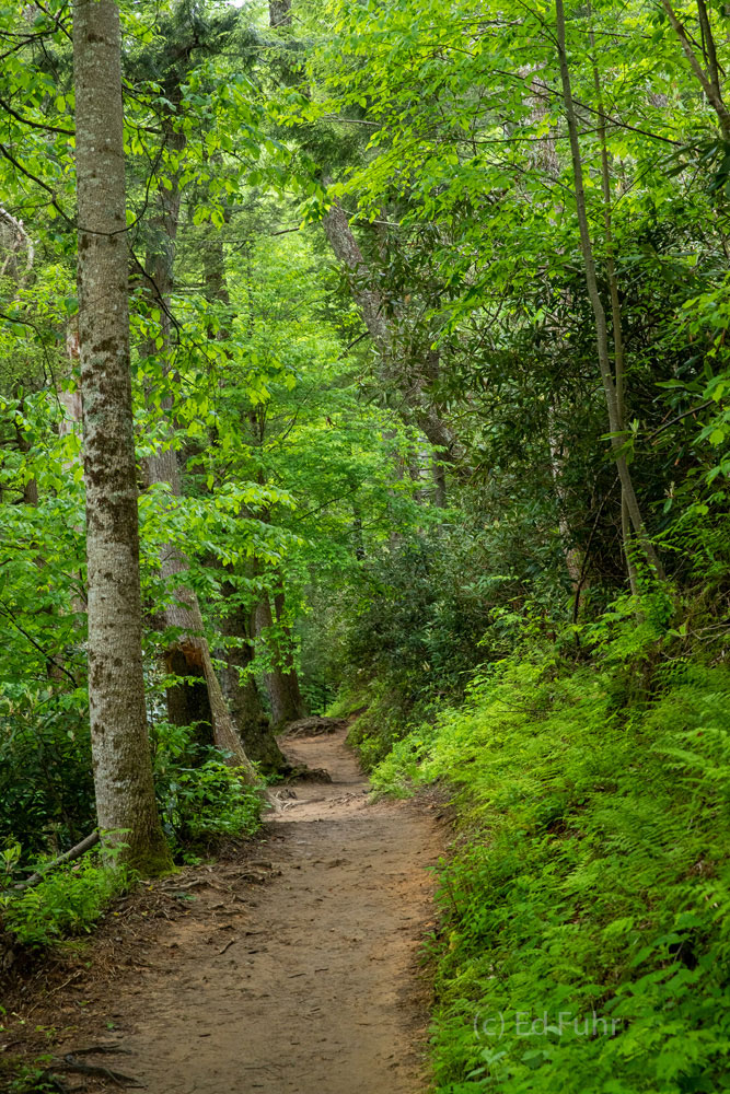 The hike up Trillium Gap Trail leads to Grotto Falls and, miles further, the peaks of Mount Leconte.  In spring it is a walk...