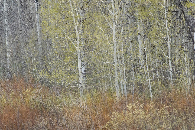 Springtime Palette in the Tetons