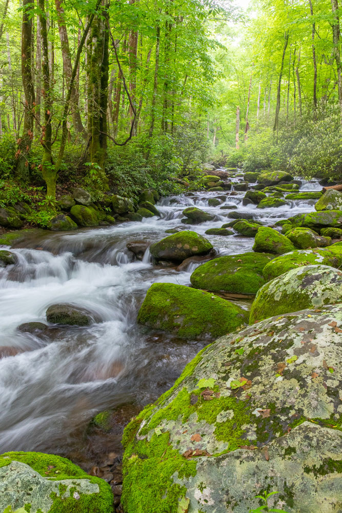spring, roaring fork, stream , photo