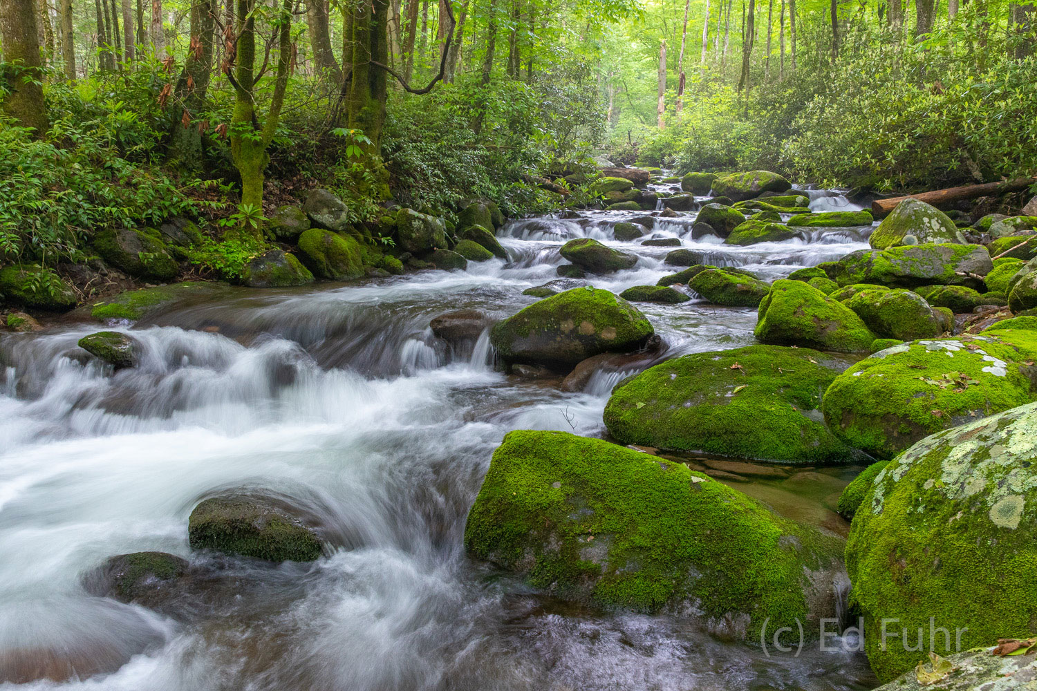 roaring fork, moss, spring , photo