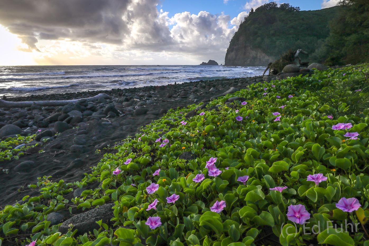 Big Island, HI, photo