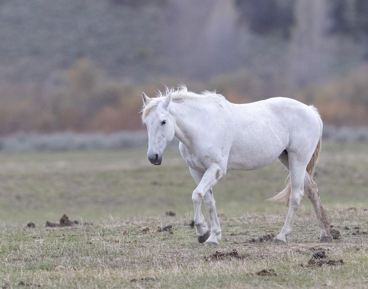 horse, Tetons, Grand Teton, photo