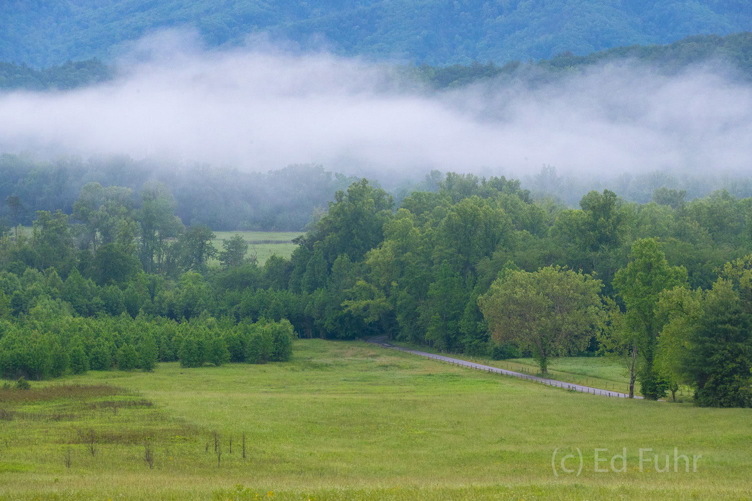 cades cove, spring, fog, , photo