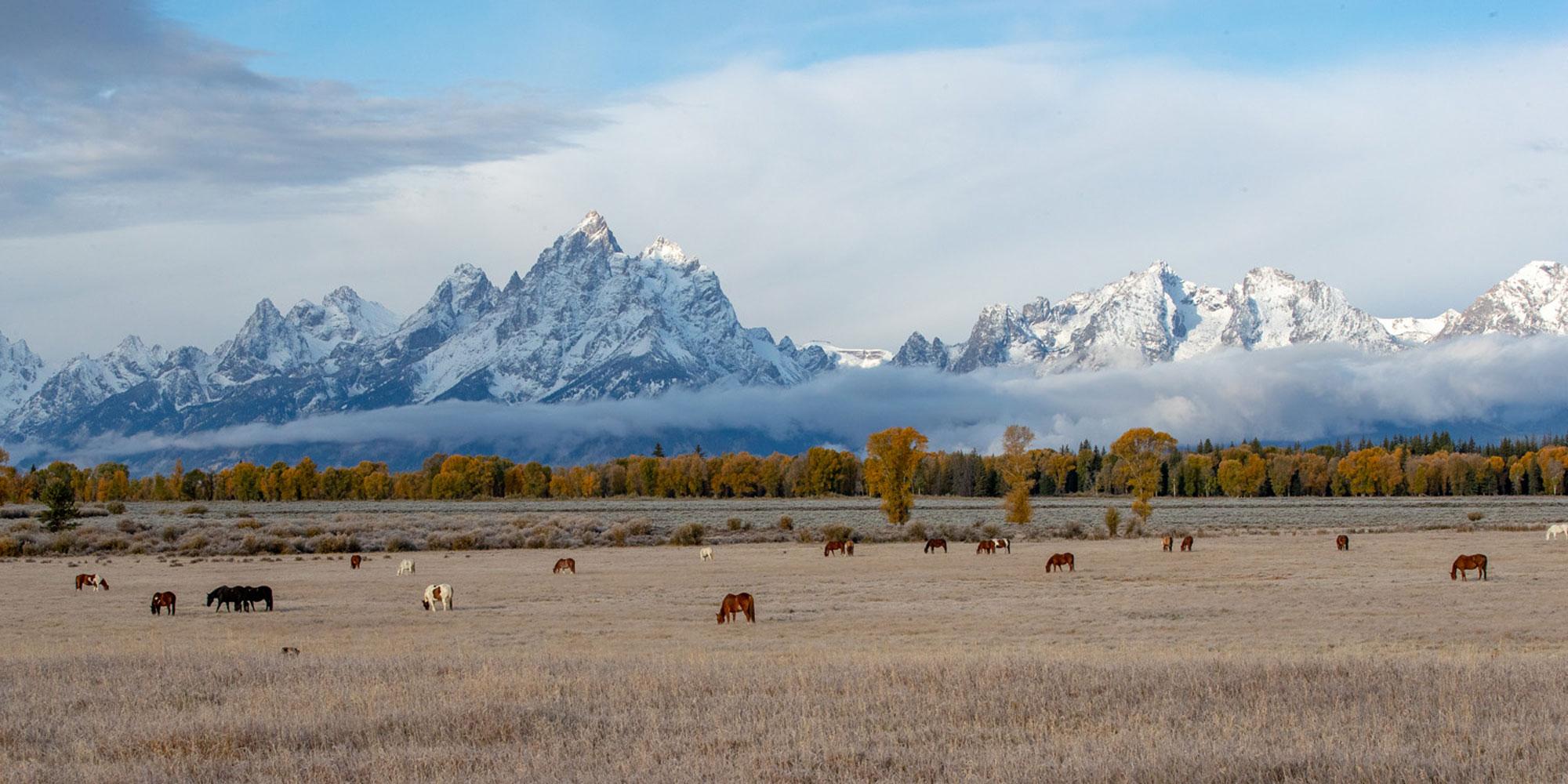 elk ranch flat, horse, autumn, Tetons, Grand Teton, photo