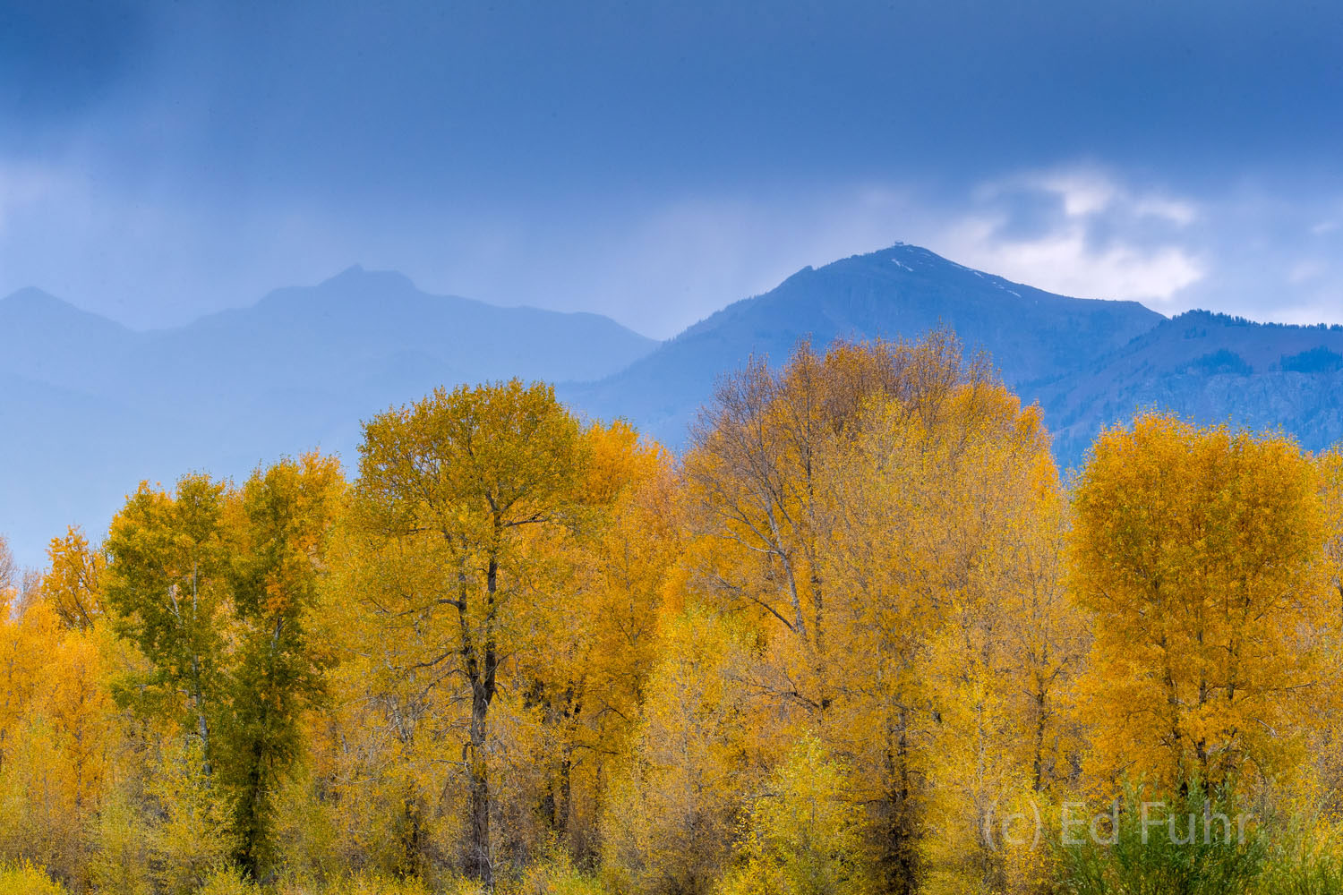 Autumn has arrived and the aspen below the Tetons are now a day away from their peak color.