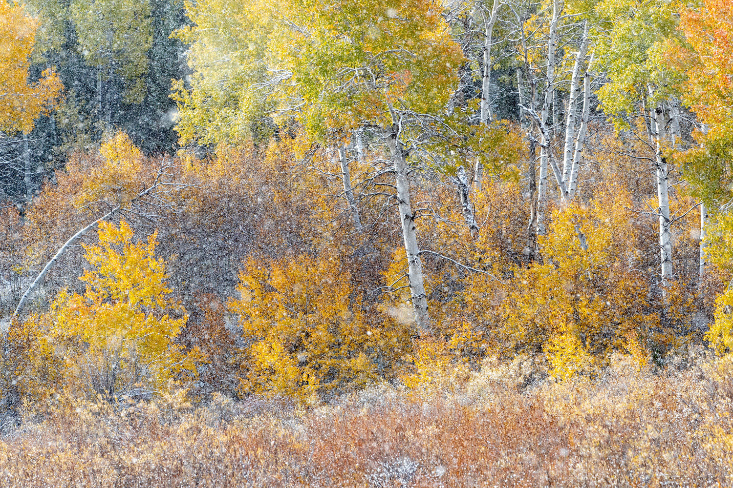 As autumn's colors peak in late September 2019, a squall of snow blows in, reminding that winter is just days away.