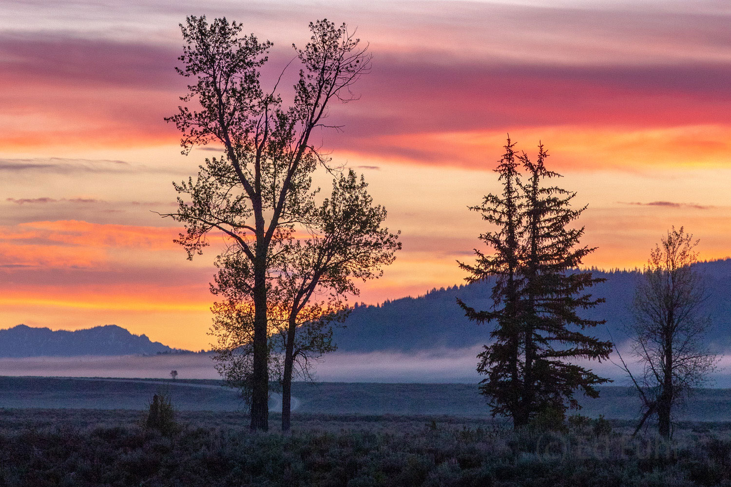 grand teton, springtime, sunrise, blacktail pond, spring photo, image, 2018, photo