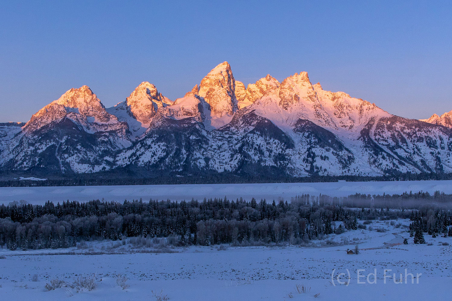 In winter the lowlands around Schwabacher Landing and the Snake River are closed as a diverse array of wildlife try to survive...