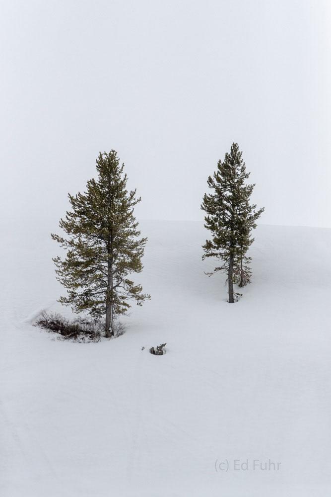 togwotee pass, snow, spring, Tetons, Grand Teton, photo