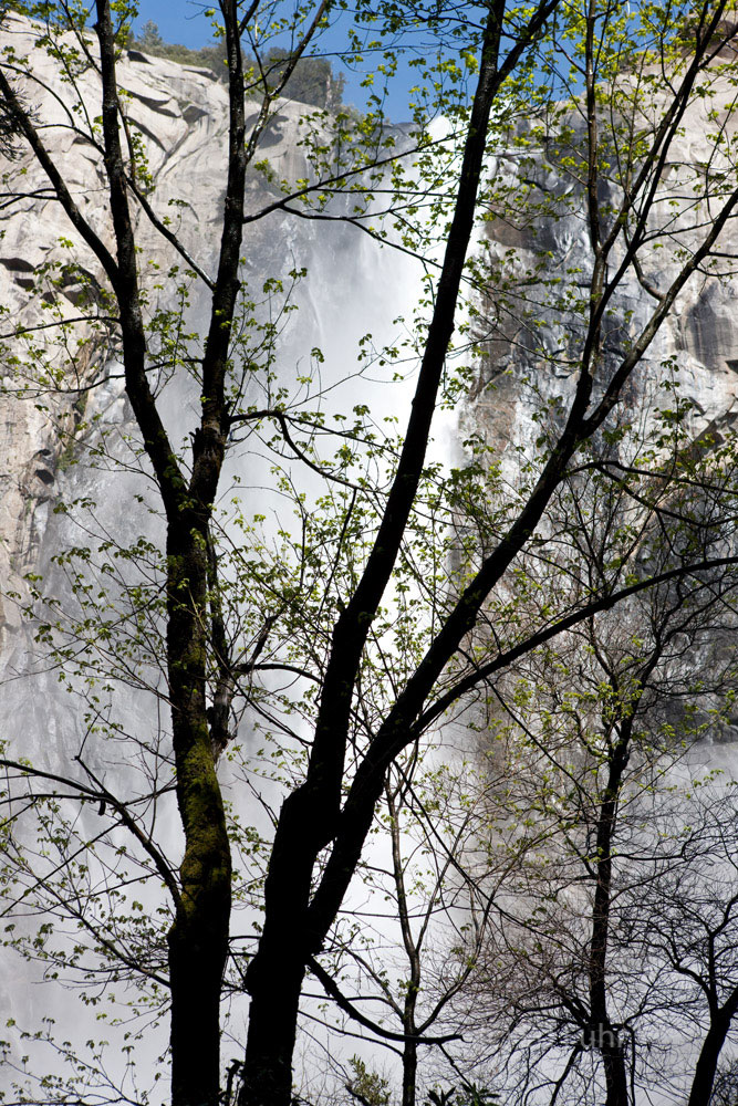 Just before the trail reaches the base of Bridalveil Falls, the rushing torrent can be heard, felt and seen through the trees...