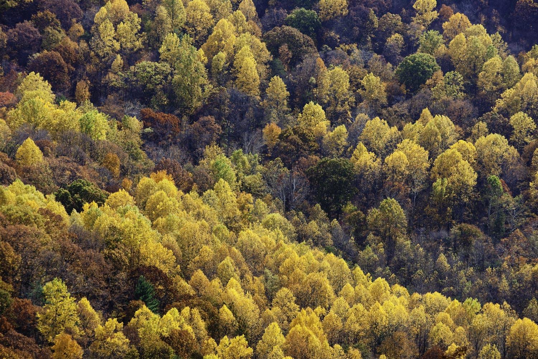 Shenandoah, Shenandoah National Park, photo, photography, images, mountains, wilderness, Virginia, fall, autumn, foliage, color, photo